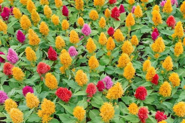 Champs de fleurs printanières colorées