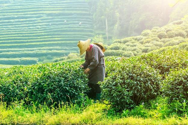 Champs frais culture de plantation terres agricoles