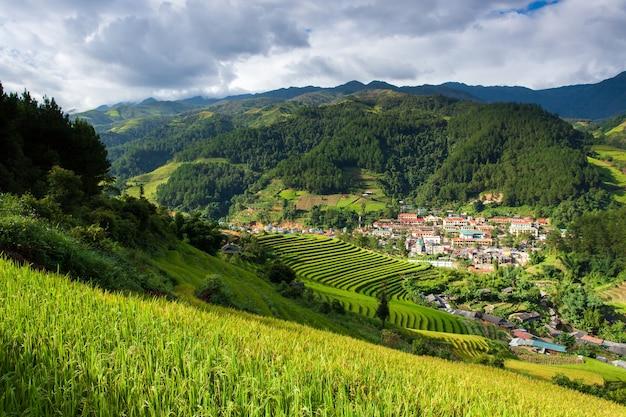 Champs de riz au nord-ouest du vietnam