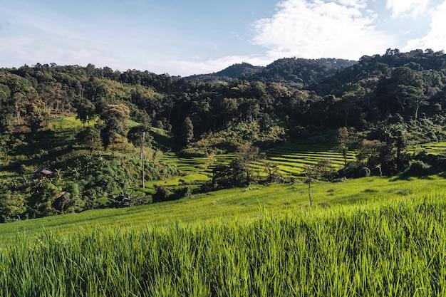Champs de riz sur la montagne le soir