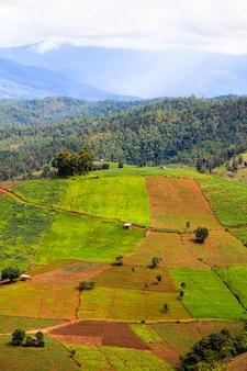 Champs de riz en terrasses à chiang mai, thaïlande