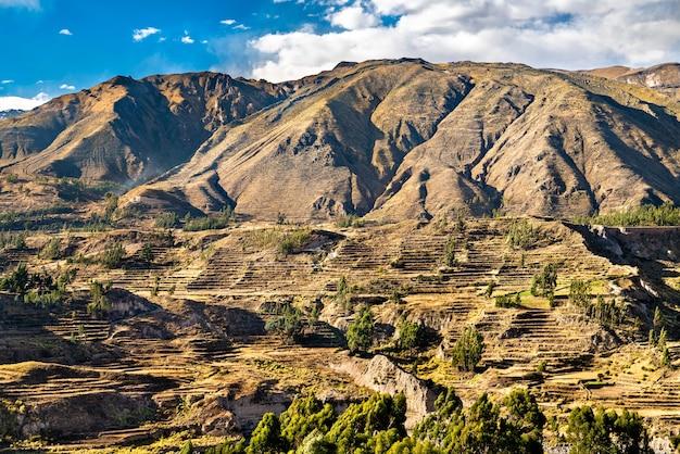 Champs en terrasses dans le canyon de colca au pérou