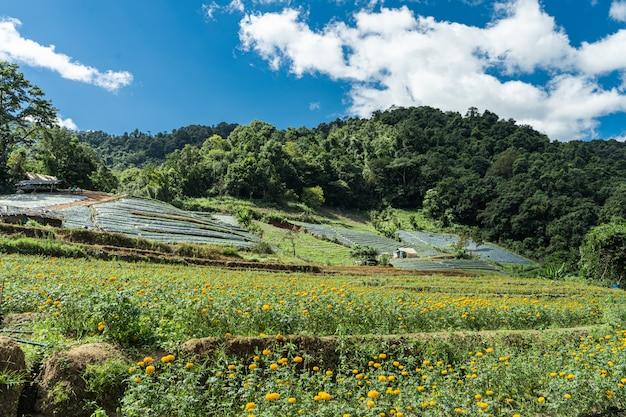 Champs en terrasses dans une vallée au milieu de la jungle avec des fleurs semées