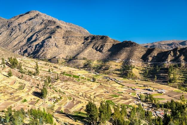 Champs en terrasses à huambo près du canyon de colca dans la région d'arequipa au pérou