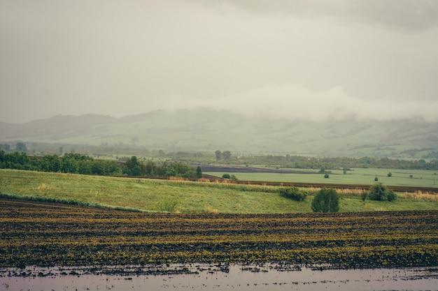 Champs verts printaniers avec des cultures plantées entre les collines.