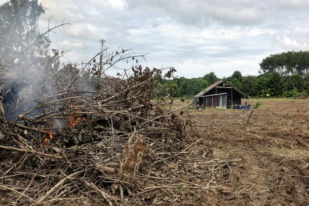 Changement climatique et réchauffement climatique des arbres en feu