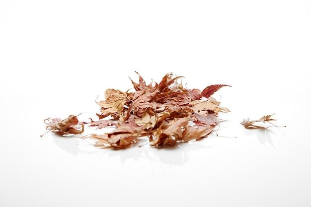 Changement de couleur des feuilles d'automne