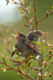 Chanter des oiseaux perchés sur une branche d'arbre
