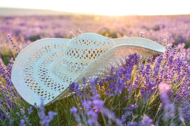 Chapeau se trouve dans un champ de lavande