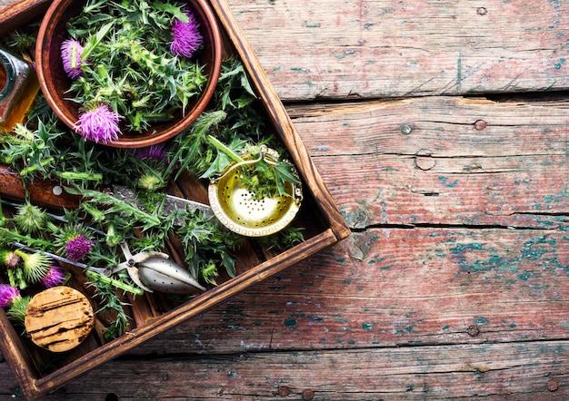Chardon aux herbes médicinales