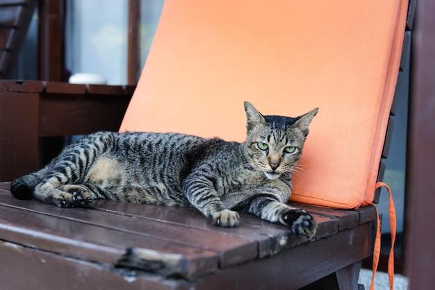 Charmant chat tabbt aux yeux verts allongé sur une chaise en bois