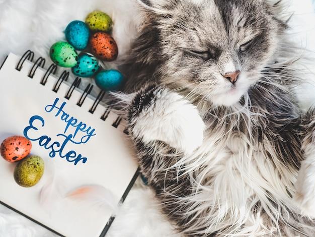 Charmant chaton et oeufs de pâques peints de couleurs vives sur fond blanc. vue de dessus, gros plan. joyeuses pâques. préparer les vacances