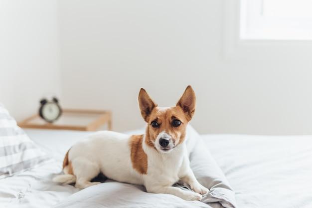 Charmant chien couché sur le lit le matin