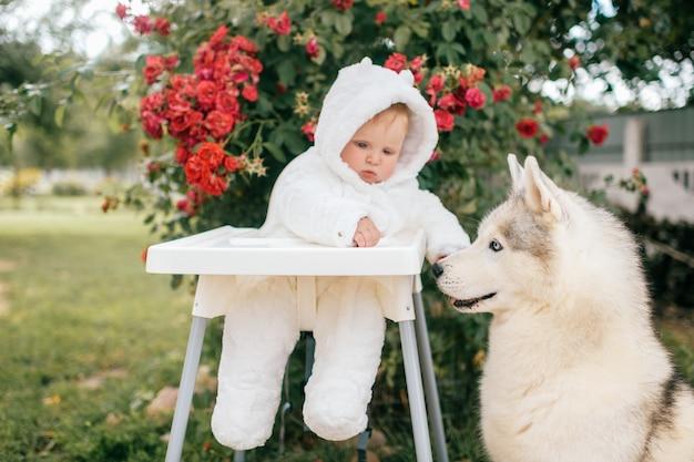 Charmant petit garçon en costume d'ours assis sur une chaise haute avec un chien husky le regardant.