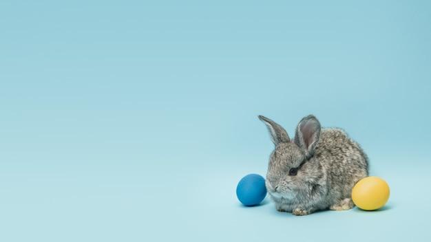 La chasse aux œufs approche. adorable lapin de pâques à proximité d'oeufs peints isolés sur fond bleu studio, flyer pour votre annonce. carte de voeux avec fond. concept de vacances, printemps, célébration.