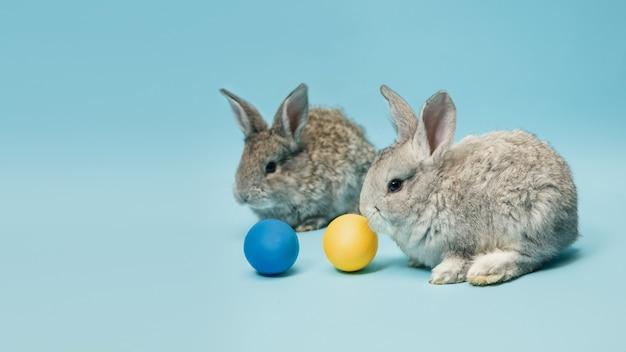 La chasse aux œufs approche. adorables lapins de pâques à proximité d'oeufs peints isolés sur fond bleu studio, flyer pour votre annonce. carte de voeux avec fond. concept de vacances, printemps, célébration.