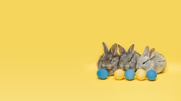 La chasse aux œufs approche. adorables lapins de pâques à proximité d'oeufs peints isolés sur fond jaune studio, flyer pour votre annonce. carte de voeux avec fond. concept de vacances, printemps, célébration.