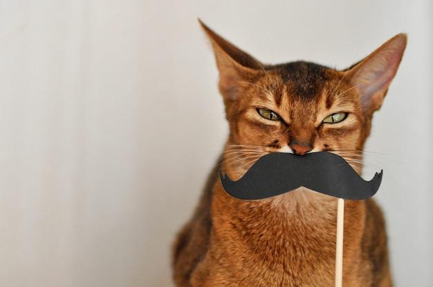 Chat abyssin avec une moustache en papier sur un fond blanc
