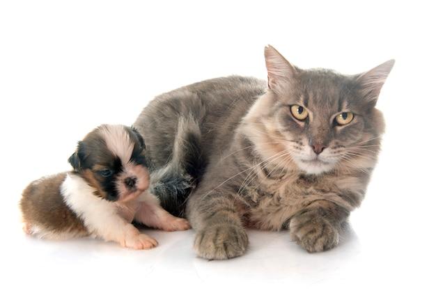 Chat adulte et chiot