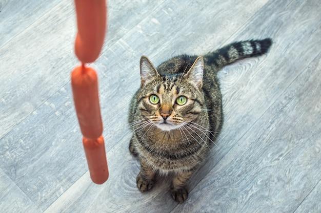 Chat affamé regarde une saucisse