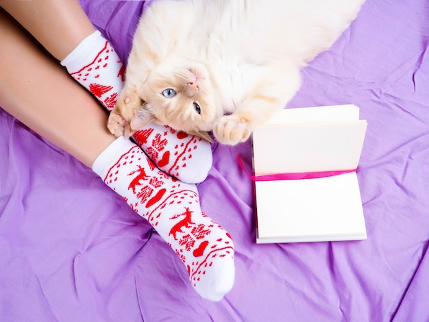 Chat allongé sur un canapé dans le salon décoré pour noël, jambes de femme en chaussettes de noël.