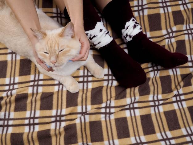 Chat allongé sur un canapé dans le salon.