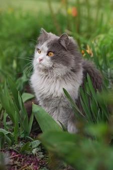 Chat allongé et jouant dans l'herbe. chaton relaxant dans l'herbe. le chat se trouve sur une pelouse verte.