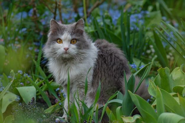 Chat allongé et jouant dans l'herbe