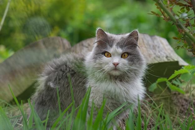 Chat allongé sur une pelouse dans un jardin