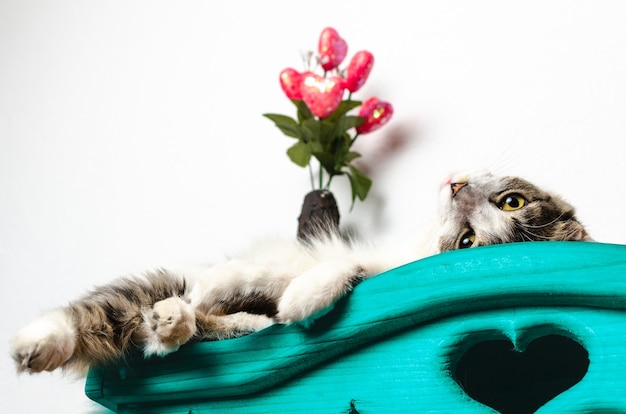 Chat allongé sur un placard bleu