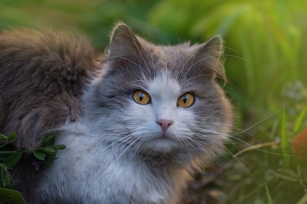 Chat assez heureux appréciant la nature