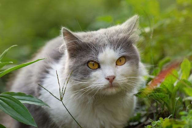 Le chat assez mignon est assis sur la nature. chaton assis dans les fleurs.jeune chat dans l'herbe