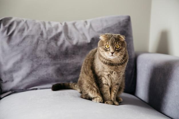 Chat assis sur un canapé