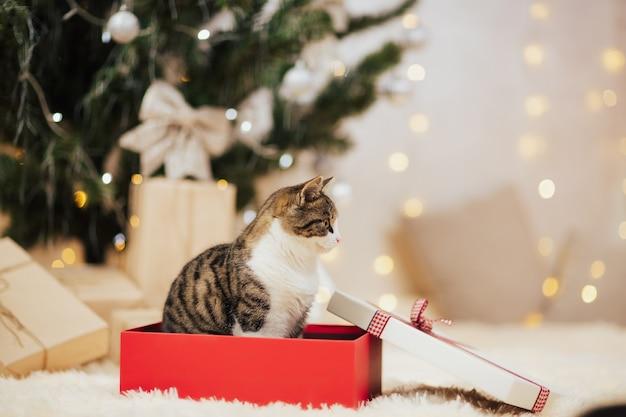Chat assis dans une boîte cadeau rouge.