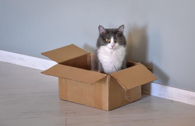 Chat assis dans une boîte, portrait de chat