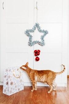 Chat assis dans la chambre, star pour le nouvel an et noël, décoration de la maison pour les vacances, sac cadeau