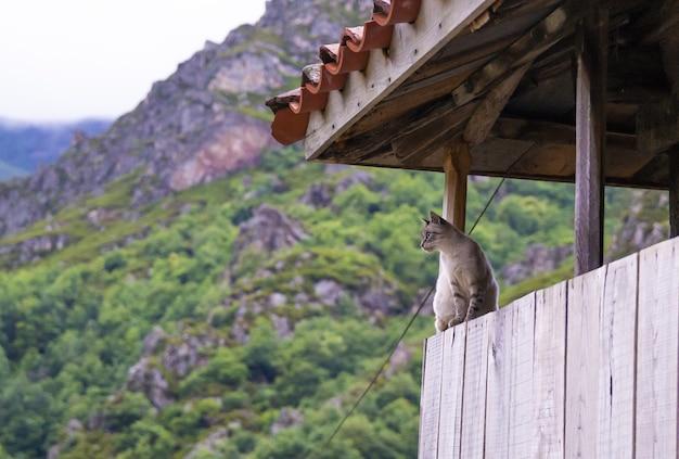 Chat assis dans un pavillon sur fond de montagne
