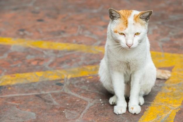Chat assis dans la rue et attendant le propriétaire