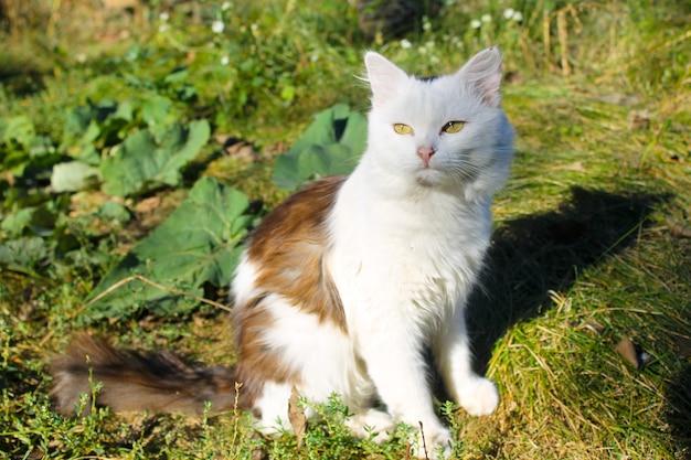 Chat assis sur l'herbe verte