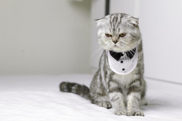 Chat assis sur un lit blanc dans la chambre.
