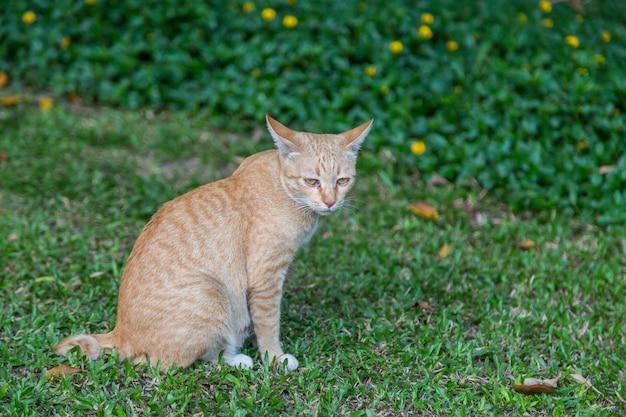 Chat assis et regarde sur fond d'herbe verte