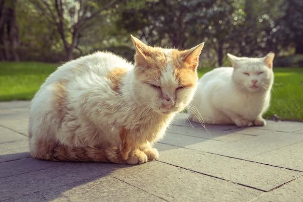 Chat assis sur un sentier pédestre