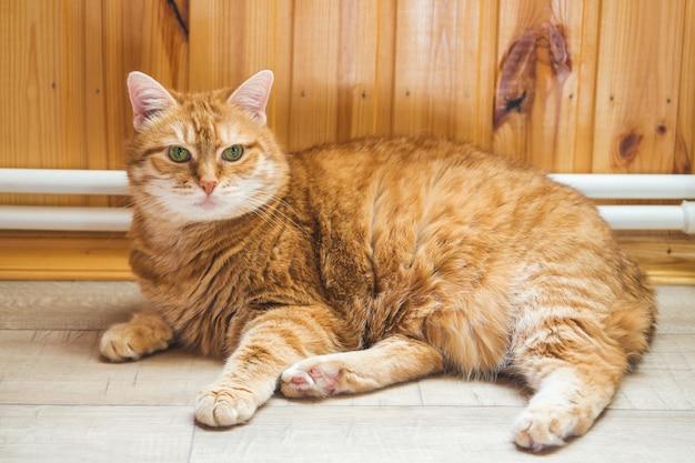 Chat au gingembre allongé sur le parquet de la maison.