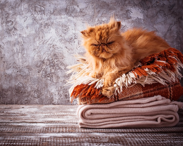 Chat au gingembre allongé sur une pile de plaids