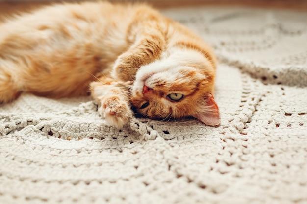 Chat au gingembre allongé sur un tapis au sol. animaux de compagnie se détendre et se sentir à l'aise à la maison