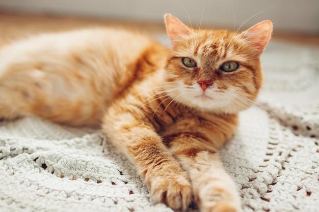 Chat au gingembre couché sur un tapis de sol à la maison. animal de compagnie relaxant et confortable