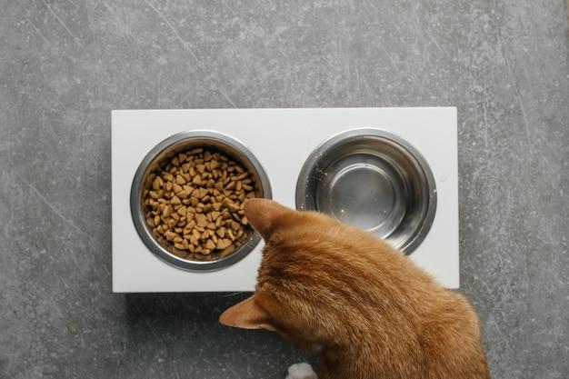 Le chat au gingembre mange dans le bol une alimentation complète et équilibrée