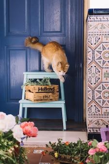 Chat au jardin en face de la porte