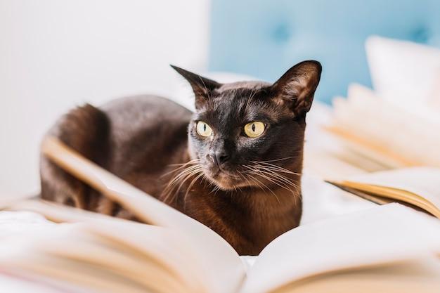 Chat au milieu des livres
