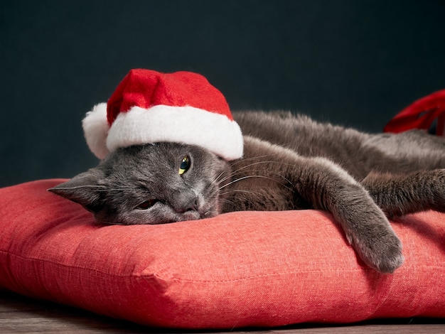 Chat au repos portant un chapeau de noël du père noël